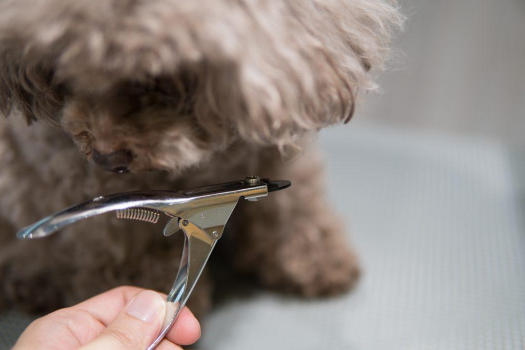 犬用爪切り