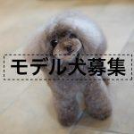 カットモデル犬募集